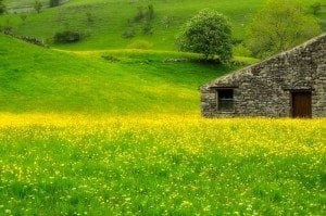 Attractions - by Muker hay meadows