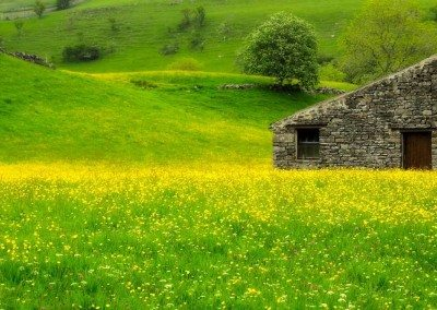 Award winning photo of the Muker wild flower meadows - Dieter Figge Mohr at Swaledale Country Holidays