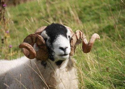 Wot you lookin at! - Ann Faithfull at Swaledale Country Holidays